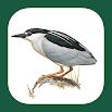 Birds of Benelux