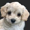 Muppy - Manage your puppy