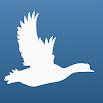Bird Quiz Europe