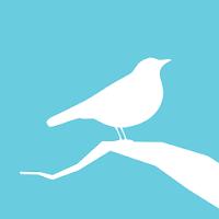 Animated Birds 785k