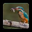 Birds Of Europe 1.2.2