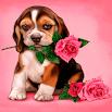 Puppy Rose Live Wallpaper 3