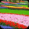 Garden Wallpaper HD 1.11
