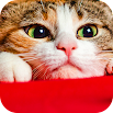 Wallpaper Cat Collection 2.0.25