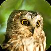 Owl Sounds 2.0