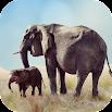 Elephant Sounds 2.0