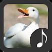 Duck Sounds 3.1.5