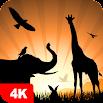 Animal Wallpapers 4K 5.2.4