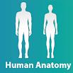 Human Anatomy and Physiology light-1.1