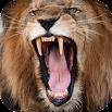 Lion Sounds 2.0