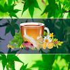 Medicina Natural y Plantas Medicinales 2.2.0