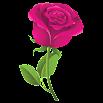 Rosas Pegatinas - WAStickerApps 1.0